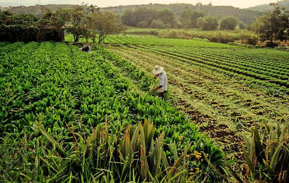 Agriculture Latin America